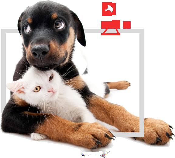 We-love-your-pet